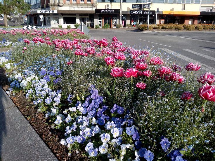 gore_spring_tulips