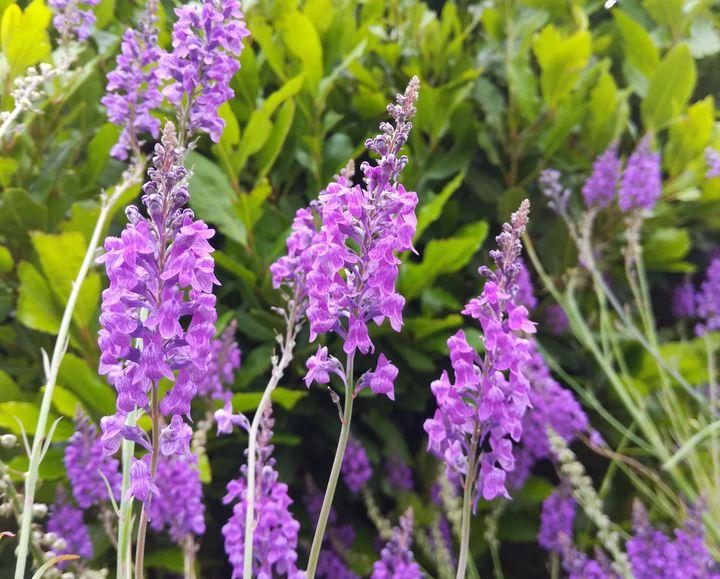 gore_summer_flowers_02