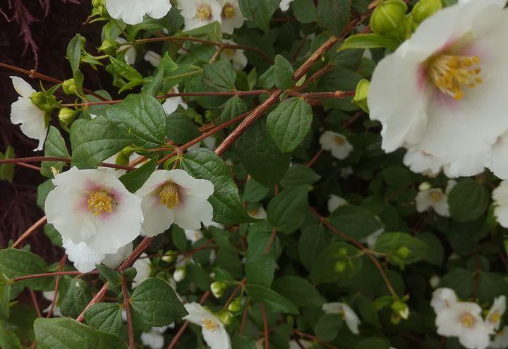 gore_summer_flowers_04