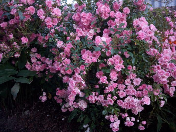 gore_summer_flowers_05