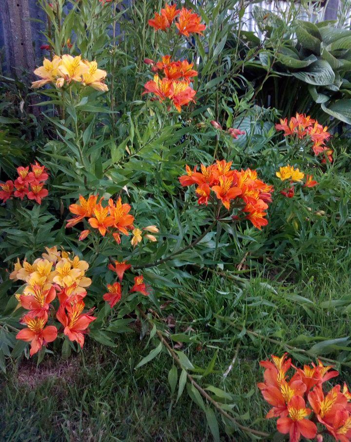 gore_summer_flowers_06