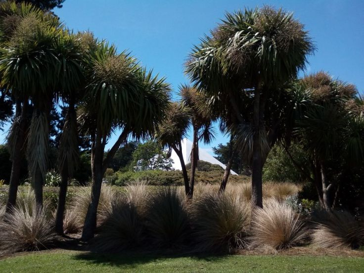inv_cabbage_trees