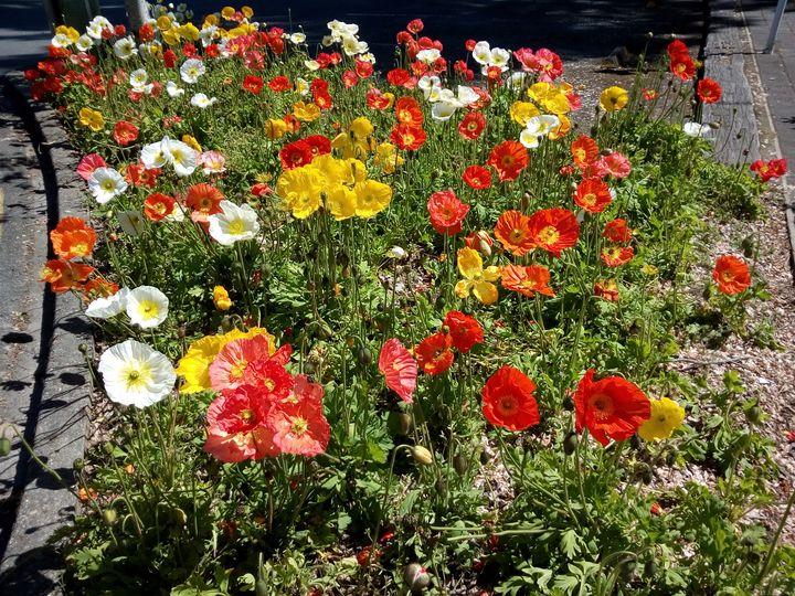 inv_flower_colours_01