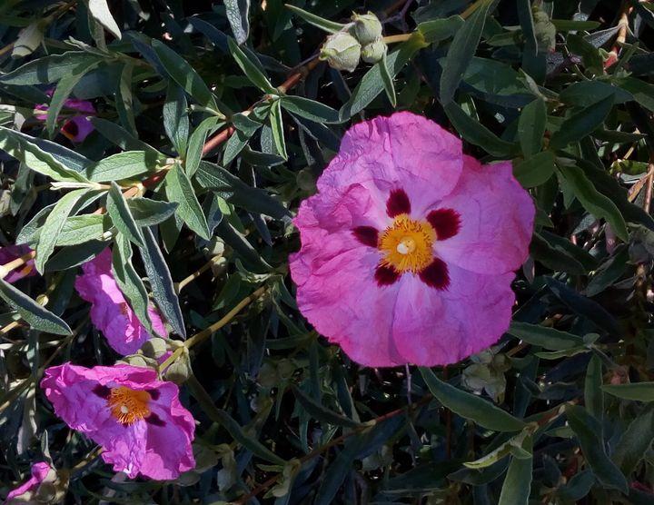 inv_flower_colours_02