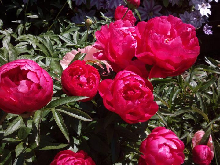 inv_flower_colours_03