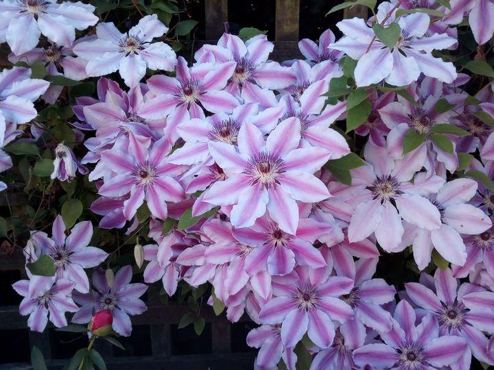 inv_flower_colours_04