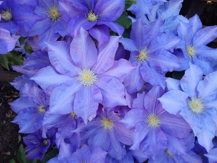 inv_flower_colours_05