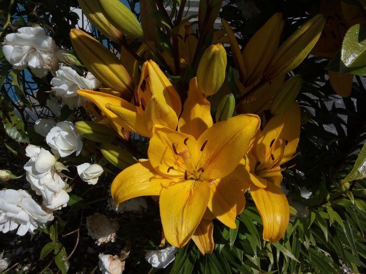 lilies_gore_04