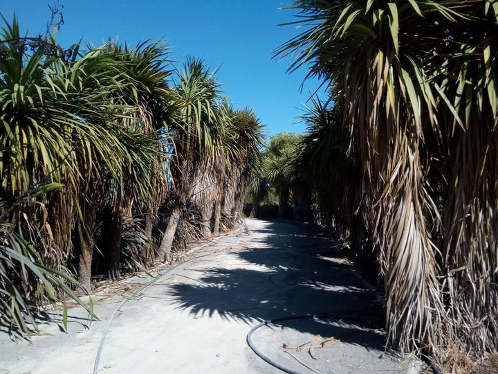 riverstone_cabbage_tree_path
