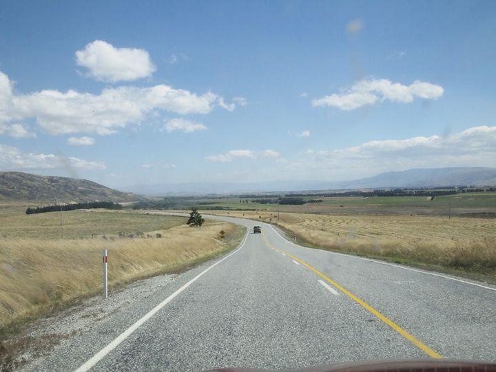 sheep_road_04
