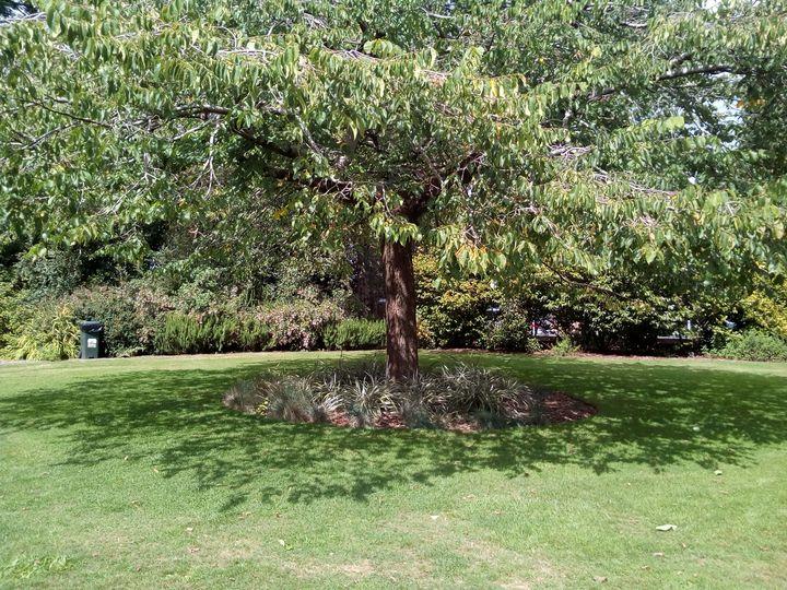 inv_eye_tree_06