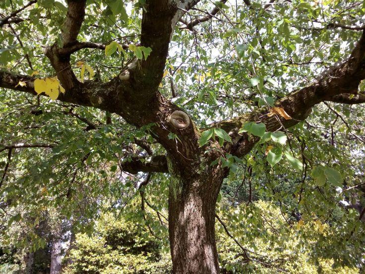 inv_vigilent_tree_1600w