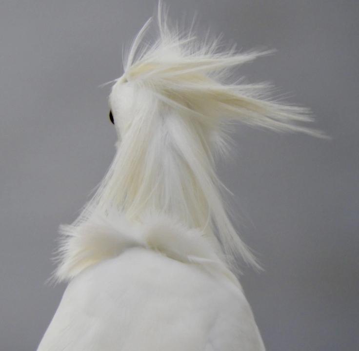 mussed-hairdo