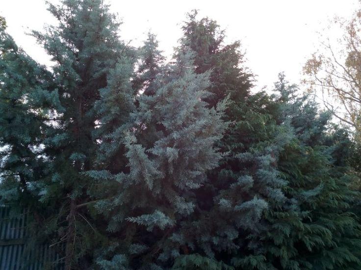 tree_trimming_02