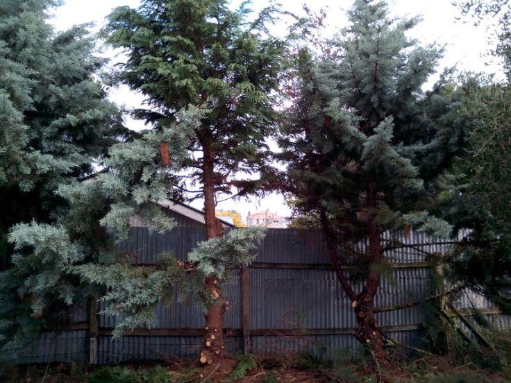tree_trimming_03