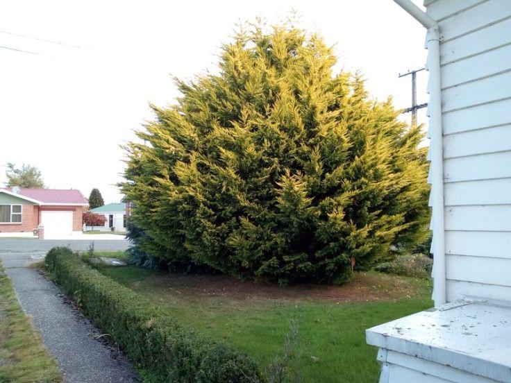 tree_trimming_05