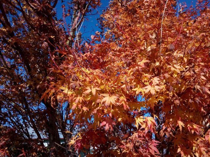 autumn_ourstreet_01