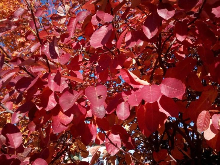 autumn_ourstreet_02