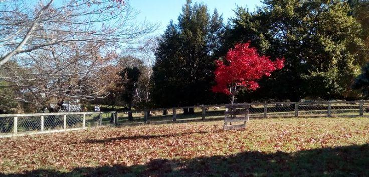 autumn_ourstreet_05