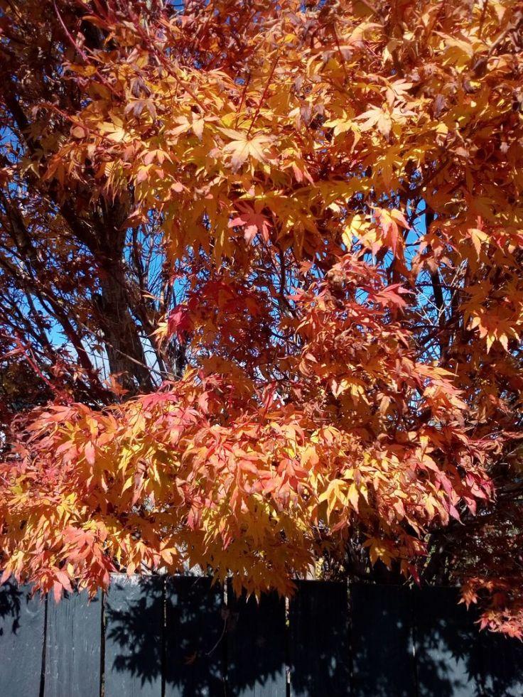 autumn_ourstreet_06