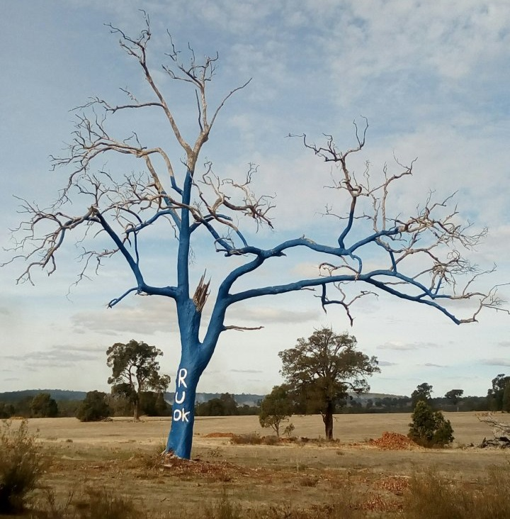 blue_tree_wa