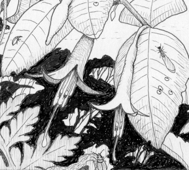 Fuchsia-termite-scale-insects