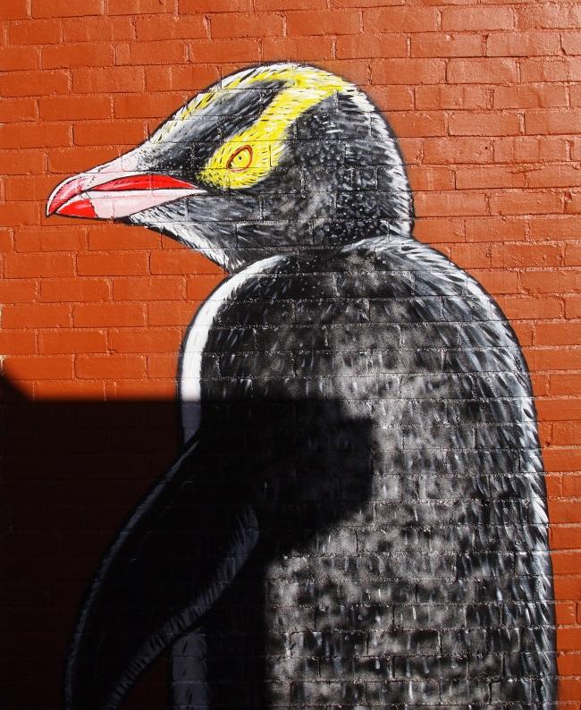 dunedin_penguin