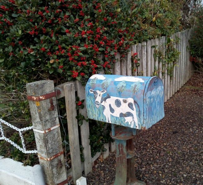 tapanui_cowletterbox