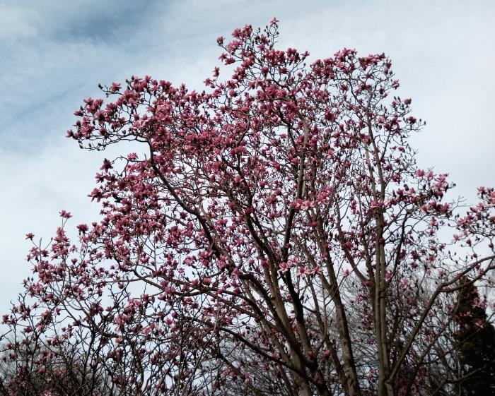 inv_spring_05