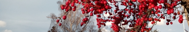 redcrabapples_alex_02