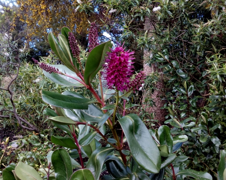 dbot_native_flowers_spring