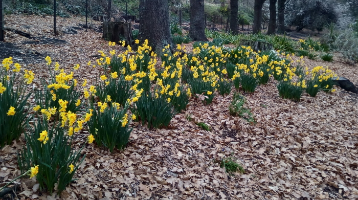 oamaru_gardens_spring_05
