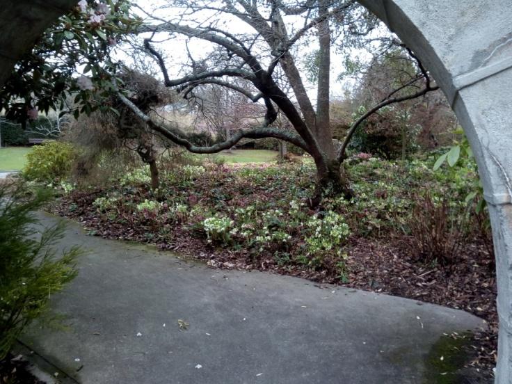 polyanthus_fountain_08