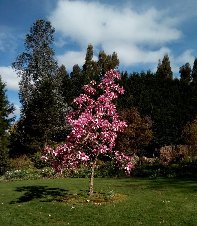 mg_magnolia_05