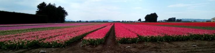 tulips_site01_05