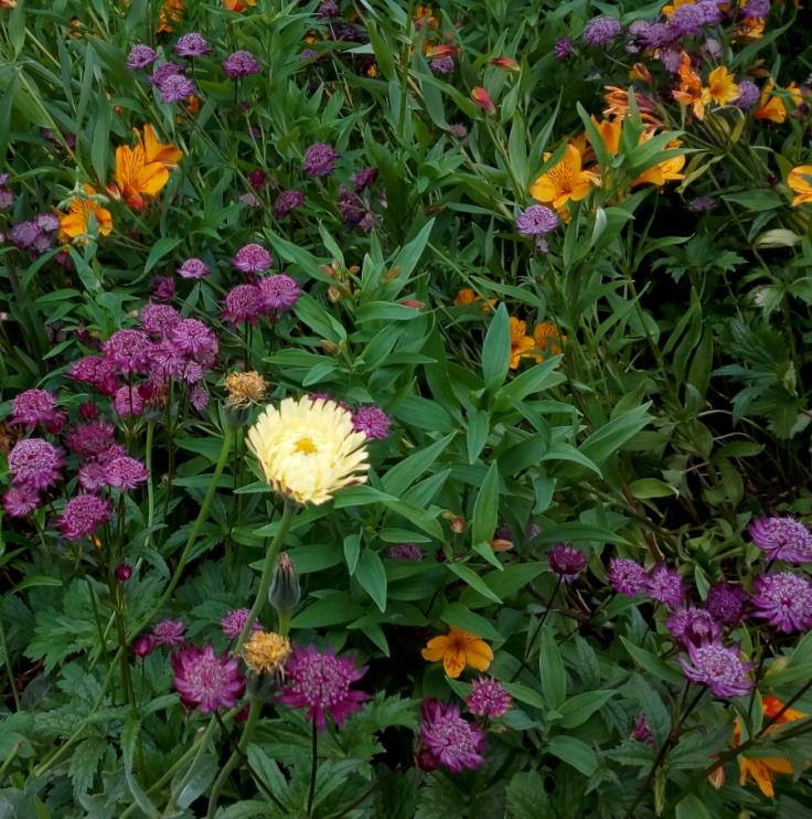flower_mix_v2