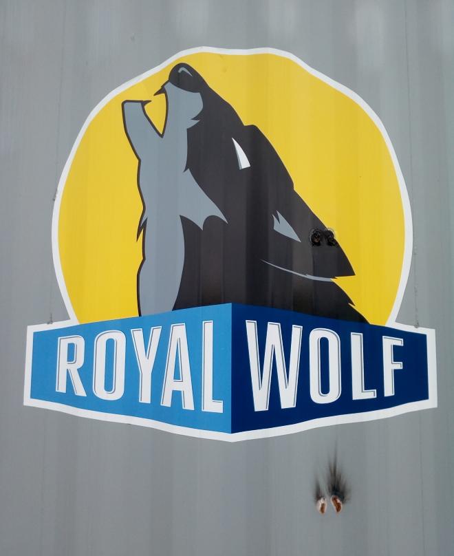royal_wolf_02