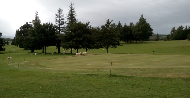 tapanui_golf_course_03