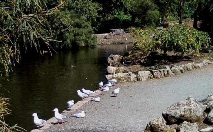 inv_gulls_by_pond_1200w