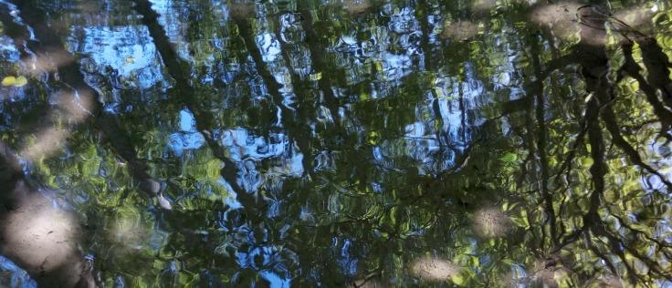 pool_reflections_1600w