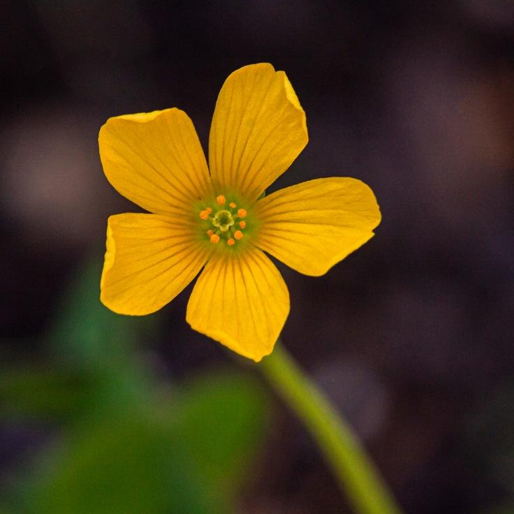 mp_flower2_9apr20_blog