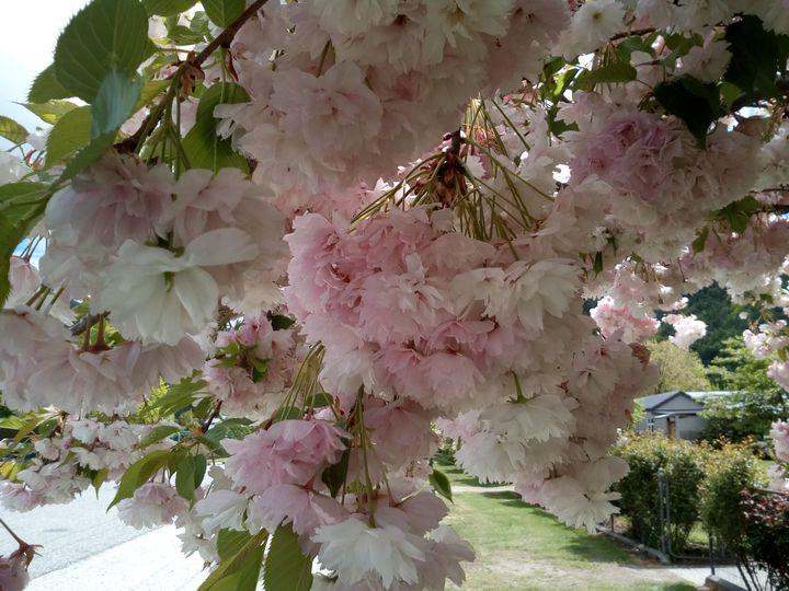 arrowtown_spring_02