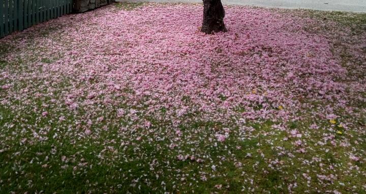 arrowtown_spring_03