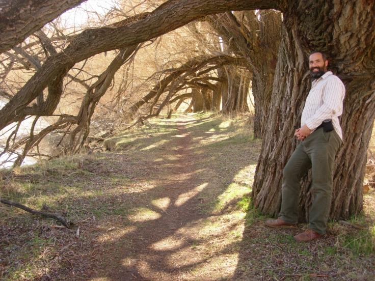 trees_queenstown_01_1200w