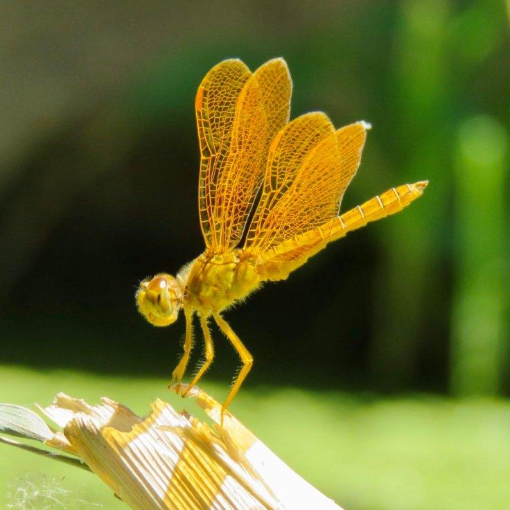 tucson_dragonfly_bogan_02